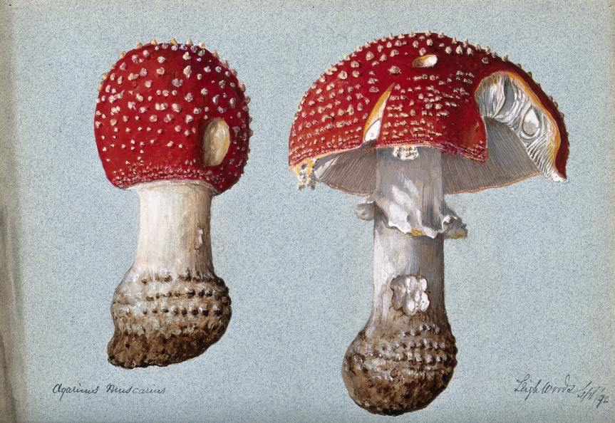 Fungi, Folklore, and Fairyland – The Public DomainReview